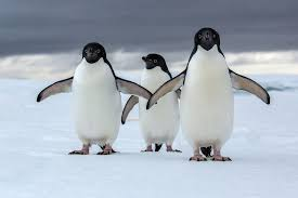 Walk with PENGUINS!!!
